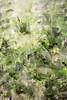 Lakeland Grasses