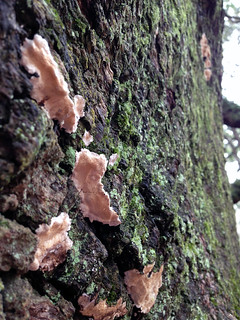 Angel Oak   by wandernwoman