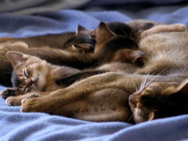 gun-hee-kitten family