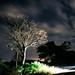LightingTree by Mauri Holc