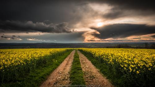 sunset sky field clouds landscape track bucks rapeseed landscapephotography