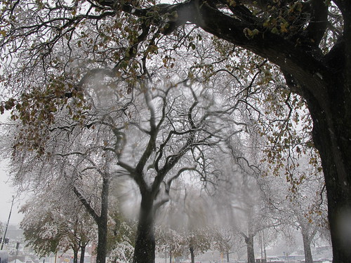 Cranmer Square trees