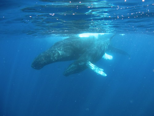 Tuesday morning whales | by HelenLWright