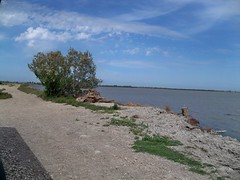 Camargue - rive nord de Vaccarès