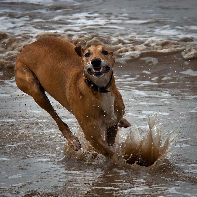 52 Weeks For Dogs,24/52 - Splash!