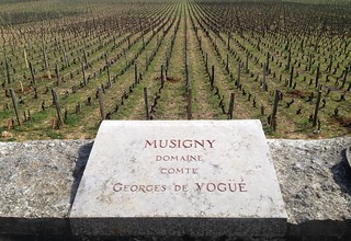 Musigny | by jamesonf