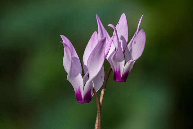 A Purple Duet
