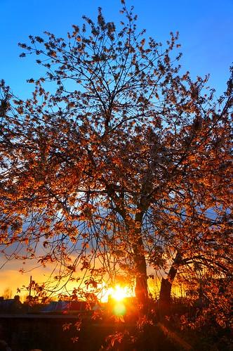 sunset sun tree alan set swan 13 photgraphy swannie alanswan swannie13 alanswanphotography swanniephotography