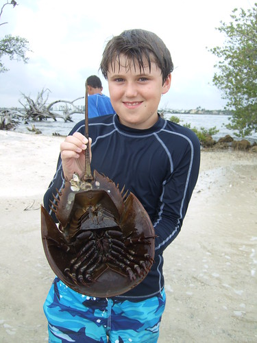 Gabriel with a horseshoe crab