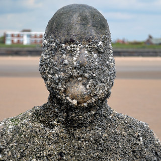 Barnacle Man | by SG2012
