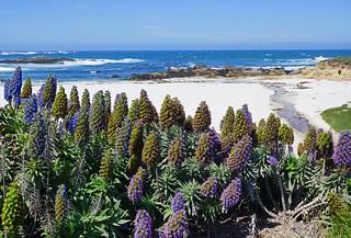 2012-04-28 Big Sur 005 Monterey, Seventeen-Mile-Drive | by Allie_Caulfield