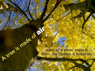 A tree is made of air
