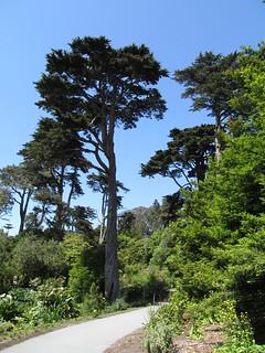 Strybing Arboretum - Golden Gate Park - San Francisco, California | by Dougtone