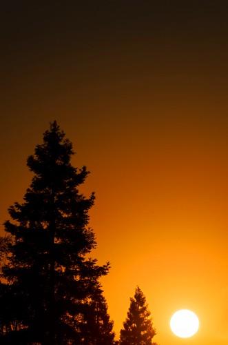 trees sun silhouette sunrise
