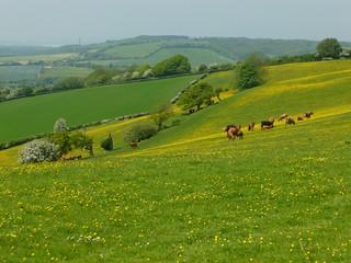 On the escarpment before lunch Sandling to Wye walk