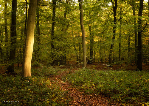 wood autumn trees england woodland season unitedkingdom sony seasonal gb autumnal woodcote goringheath a99 sonyalpha andyhough slta99v andyhoughphotography sonyzeiss2470f28zassm