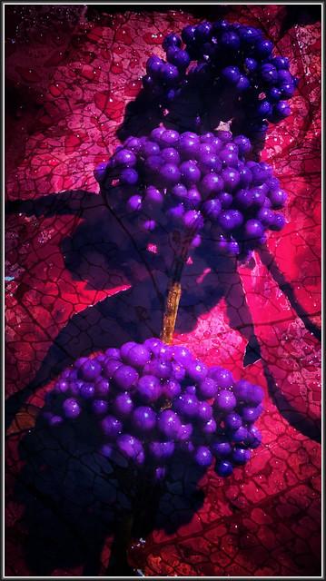 Purple Berries TudioJepegii