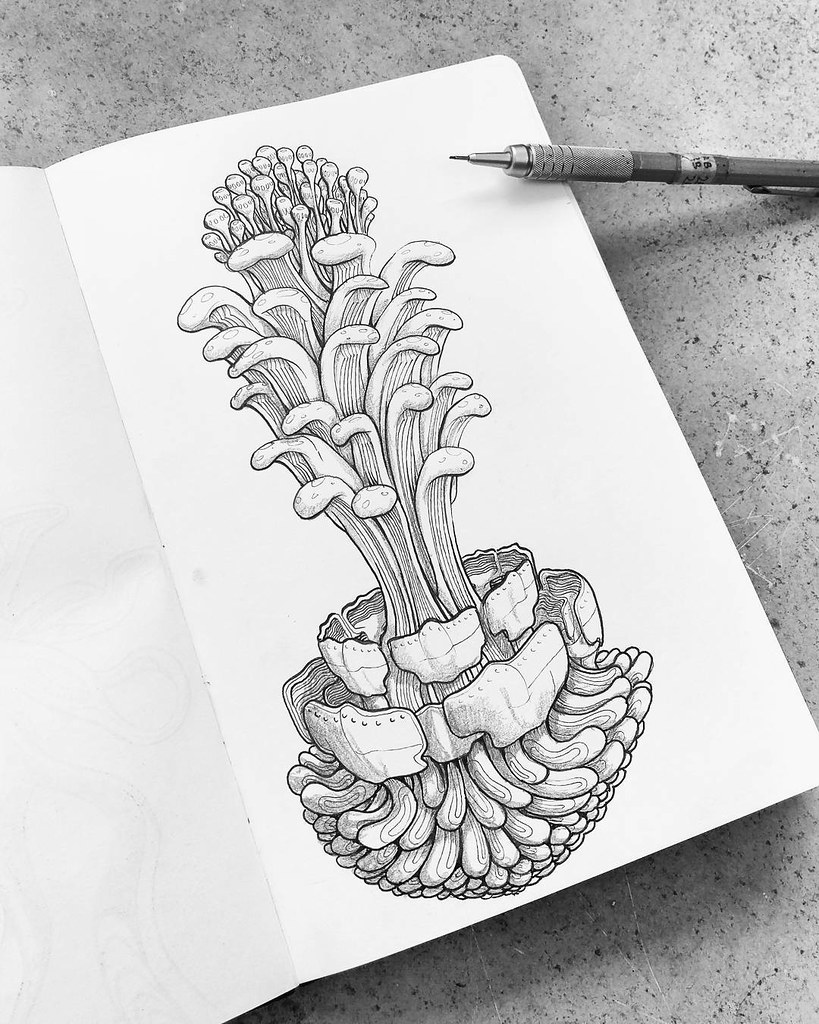 Sketching bizarre natural growy things to try out some new flickr