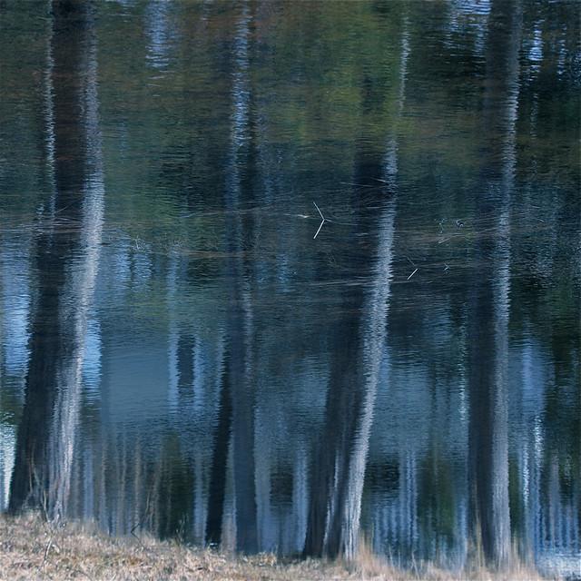 Reflet des pins devant la Maison de la Lune...!!!