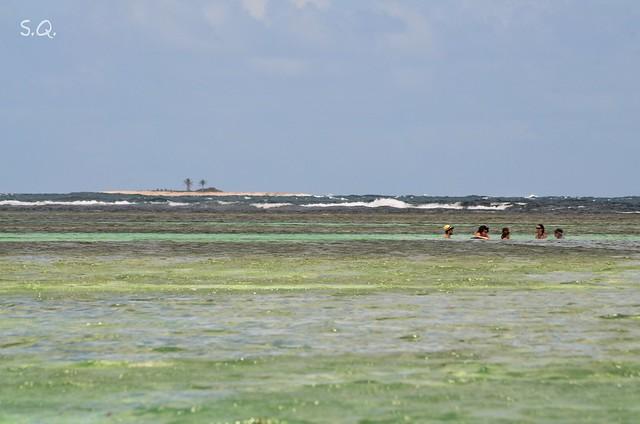 An Island in the lagoon