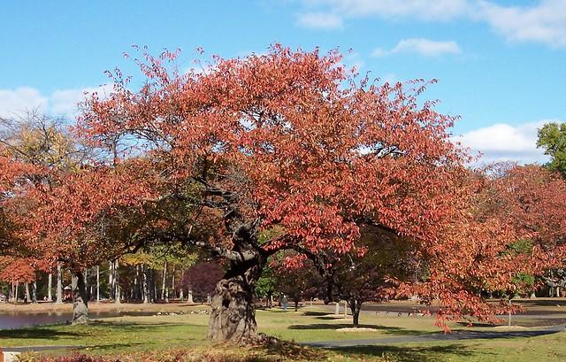 Nomahegan Park