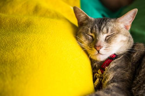 Sleepy Cat | by Julian Schroeder