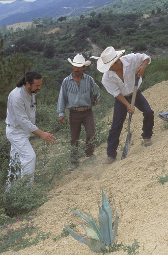 Agaves for erosion control | by USFWS Headquarters