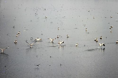 srilanka waterbirds ulhitiyareservoir