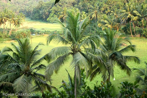 Fields in goa | by Rohir Creations