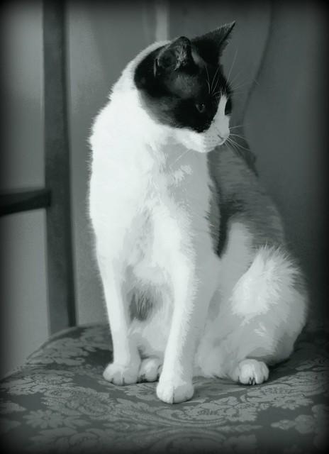 Royal Chloe