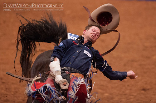 horse sport cowboy western rodeo bronco saddle 2012 bucking rodeoaustin