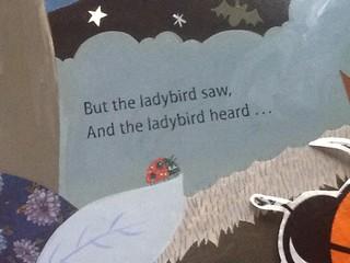ftt ladybird finds herself in print 2