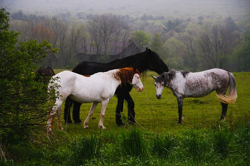 county horse columbia