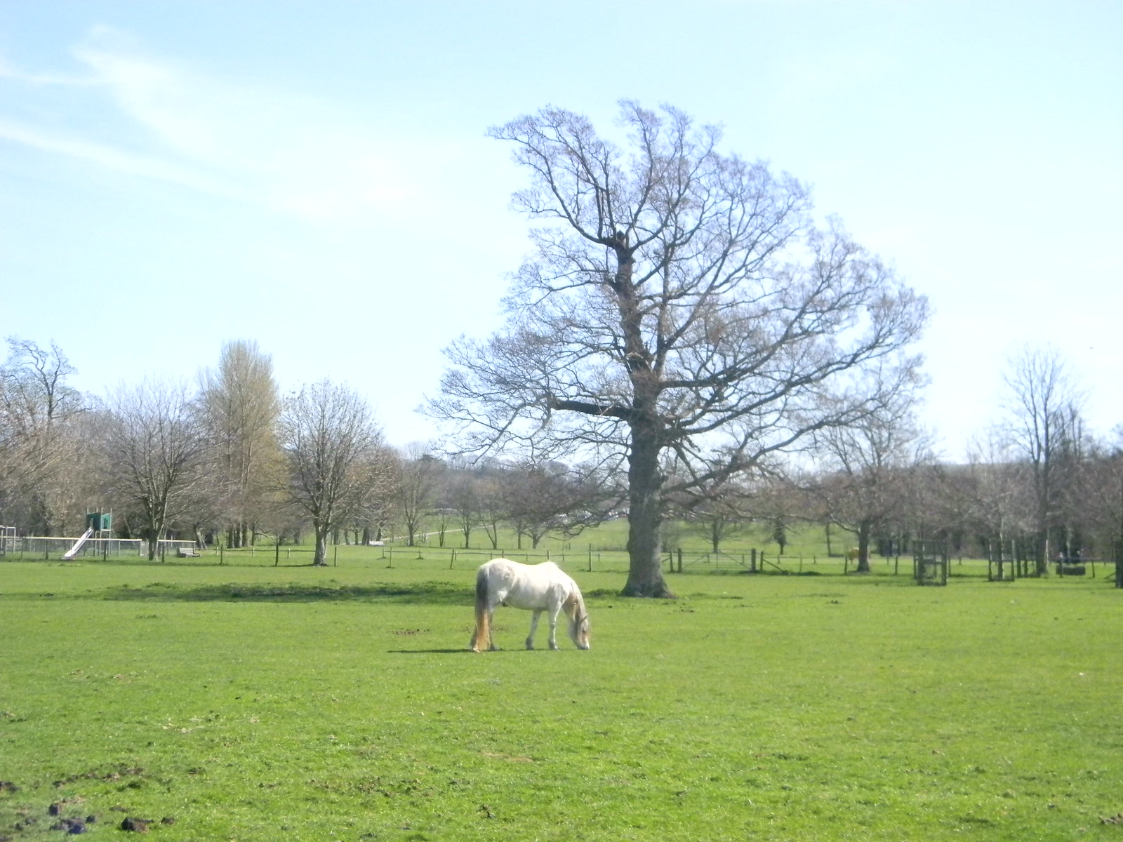 Horse with tree Firle Park. Lewes Circular via West Firle