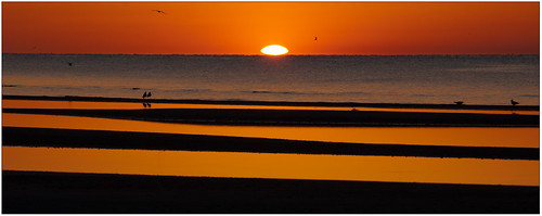 orange sun birds sunrise mississippi waveland rise