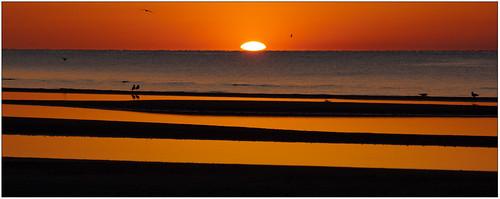 orange sun birds sunrise mississippi waveland rise