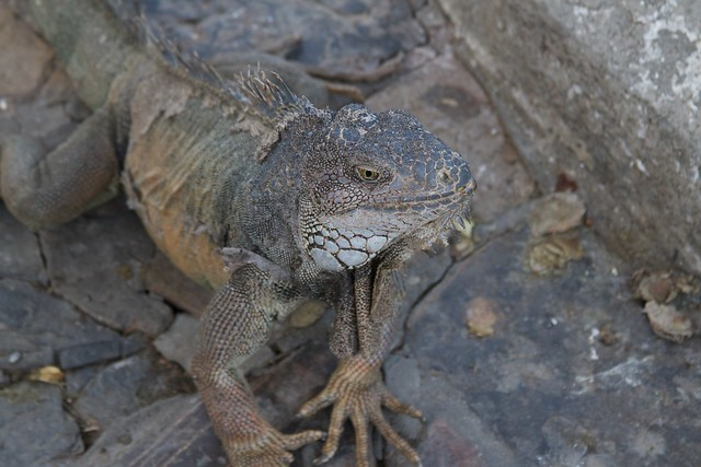 iguana park guayaquil