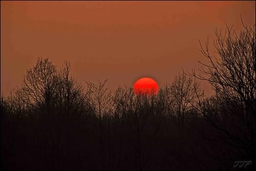 sunset tree canon tamron