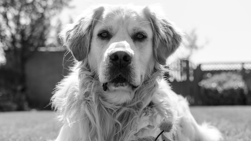 Bailey in Black & White