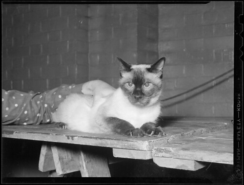 Cats   by Boston Public Library