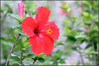 flower | by cuatrok77