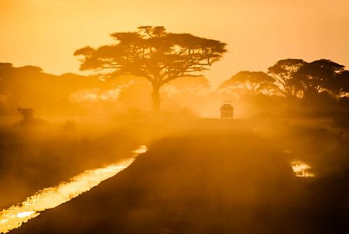 africa road park travel sunset red tree nature landscape kenya safari dust amboseli kajiado