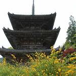 壺阪寺 やまぶき - IMG_1396