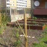 Hyresgästföreningens odlin i Herrgården_1