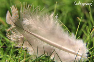 Feather | by Baderyousef