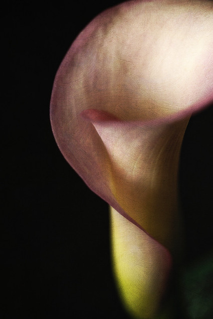 In the bulb there is a flower