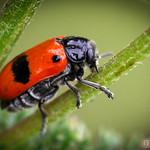 Giant Bug :)