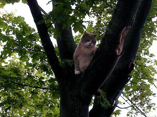 Quincy in the tree. | by Patrick Sean Mannion