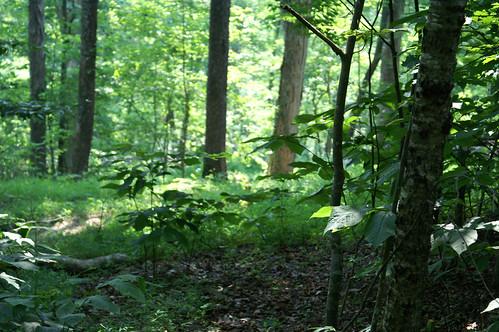 sunlight tree green leave tenn bscamp06