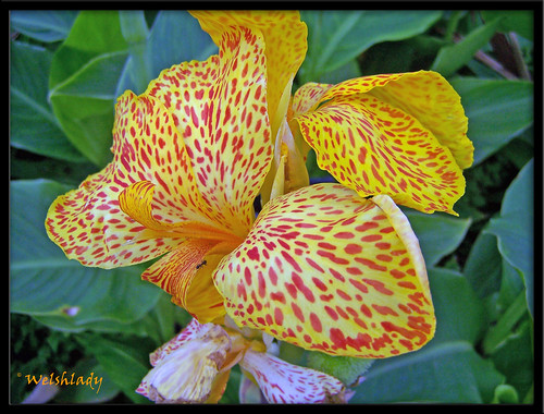 Pretty Flower...